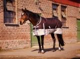 Попона для лошади 125 см