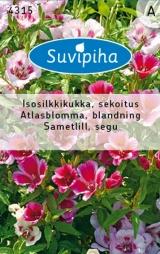 "Семена цветов Кларкия ""Sametlill"" 0,4 гр."